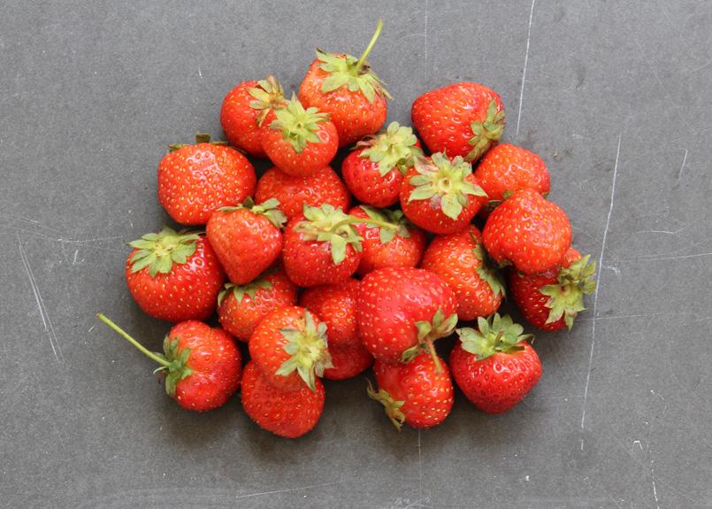 SFC_strawberries.jpg