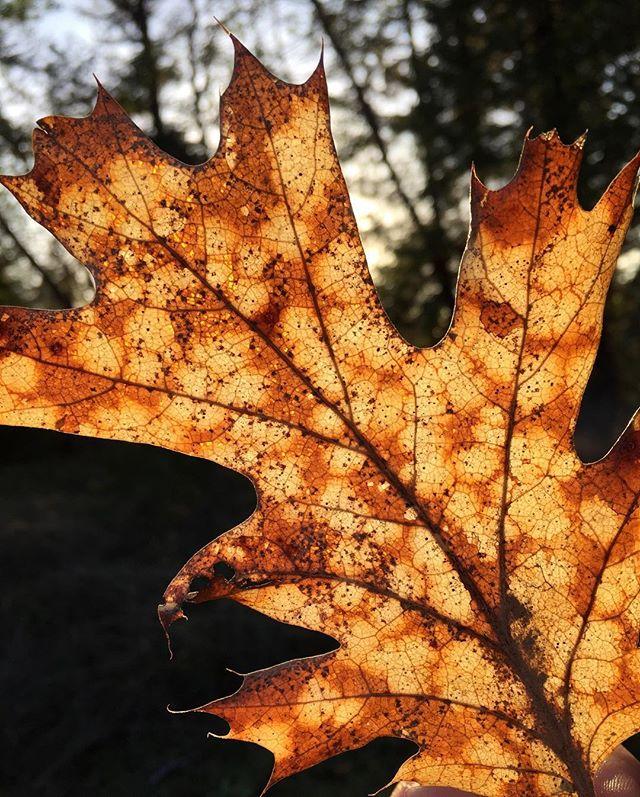 #leafmebe #natureisawesome #getawayfromyourdesk #amwriting #writingretreat #lifeinthewoods