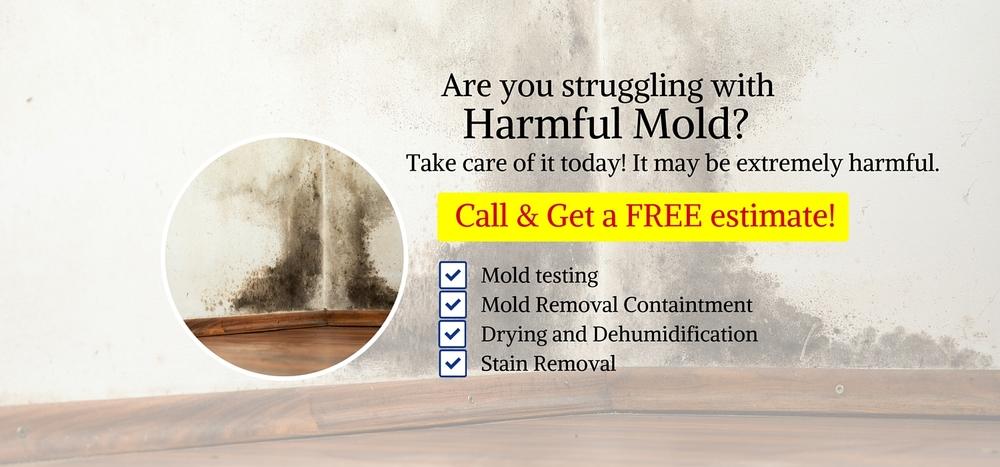 Mold-damage-mold-testing-san-diego-banner1
