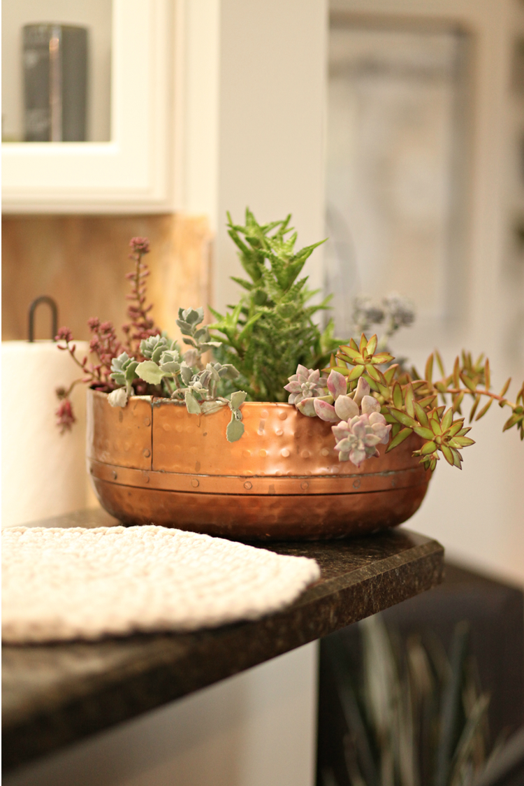 Copper bowl with succulents