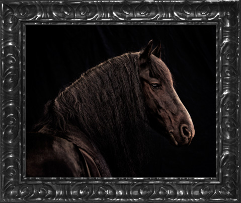 Black ornate 16x20 frame
