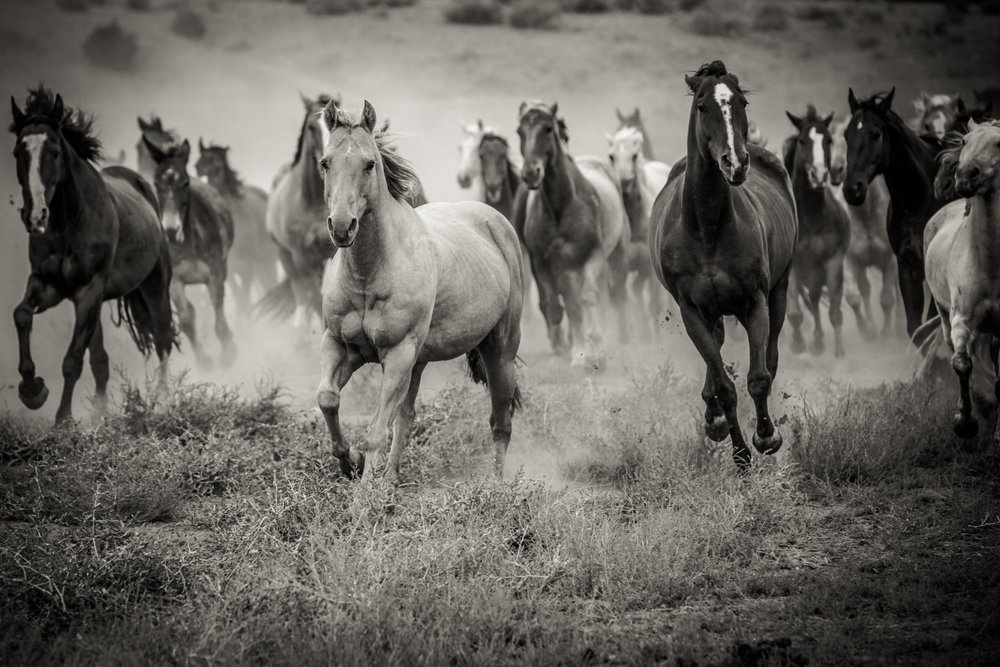 val-westover-photography-montana-horses-photography-expedition