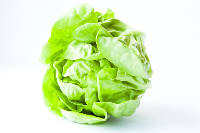 lettuce-plant-smart-diet-recipes