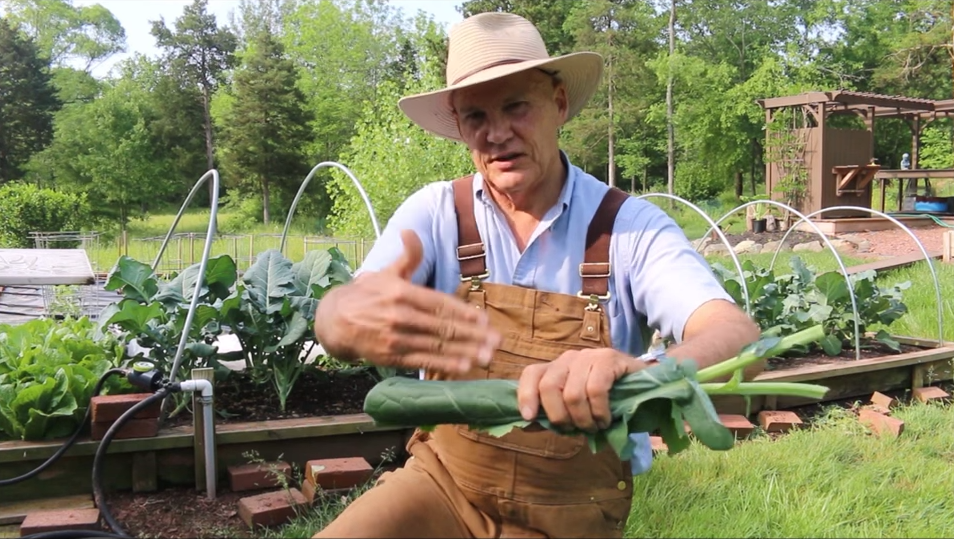 farmer-fred-how-to-cut-broccoli-leaves