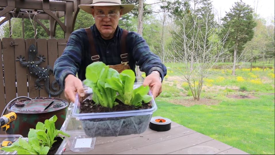 Growing lettuce in a cheap mini-greenhouse you can make at home!