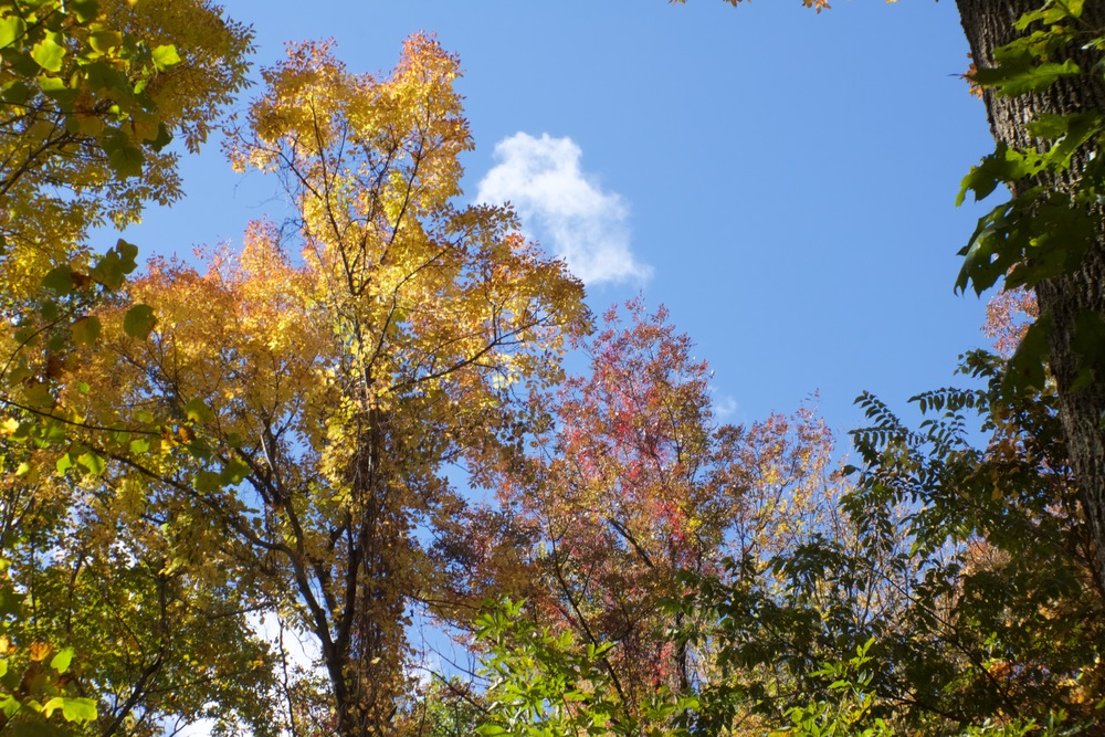 Bright skies with fall foliage...