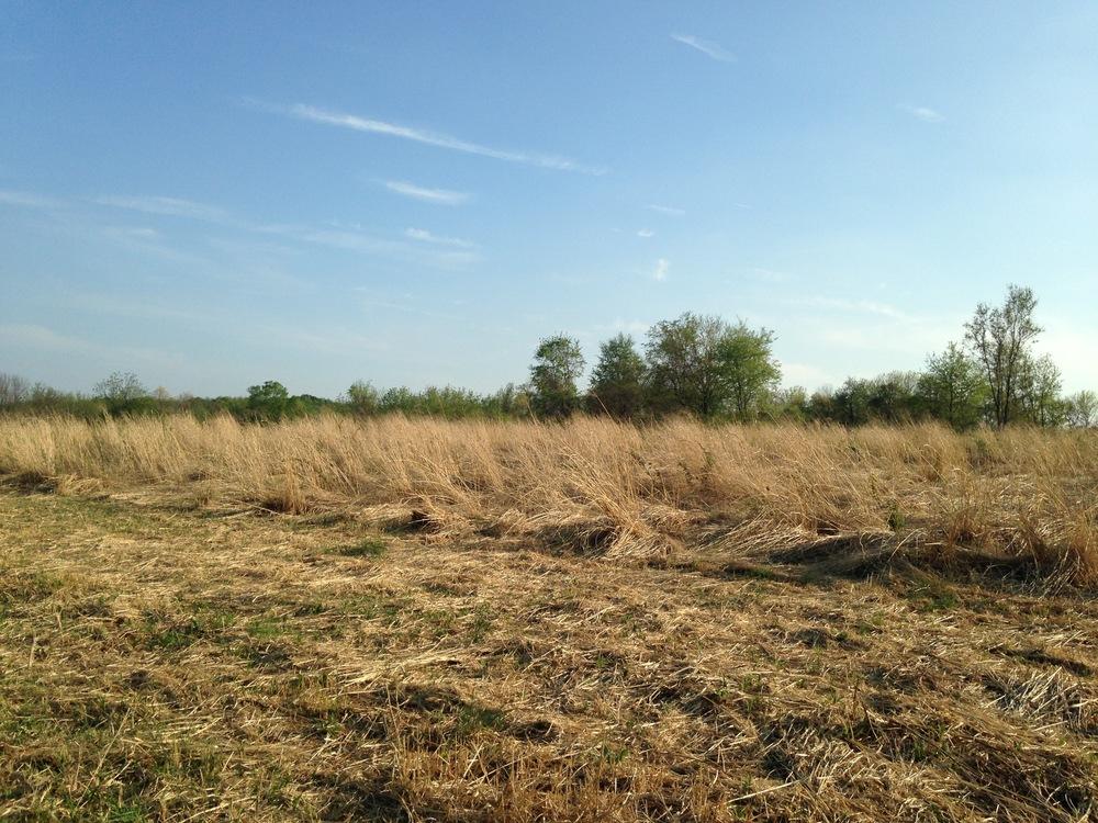 jacobsburg-state-park-open-plains