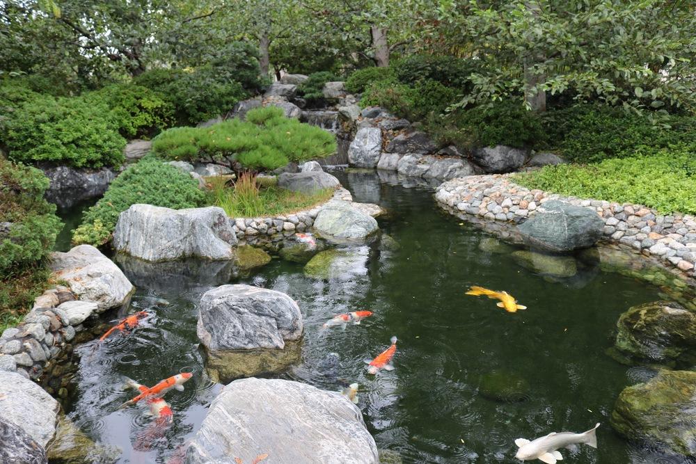 japanese-koi-balboa-park