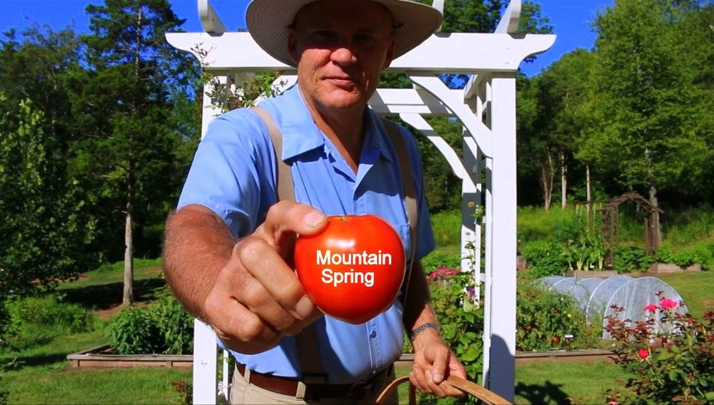 Farmer Fred promoting better health and showing off one of his home grown Mountain Spring Tomatoes!