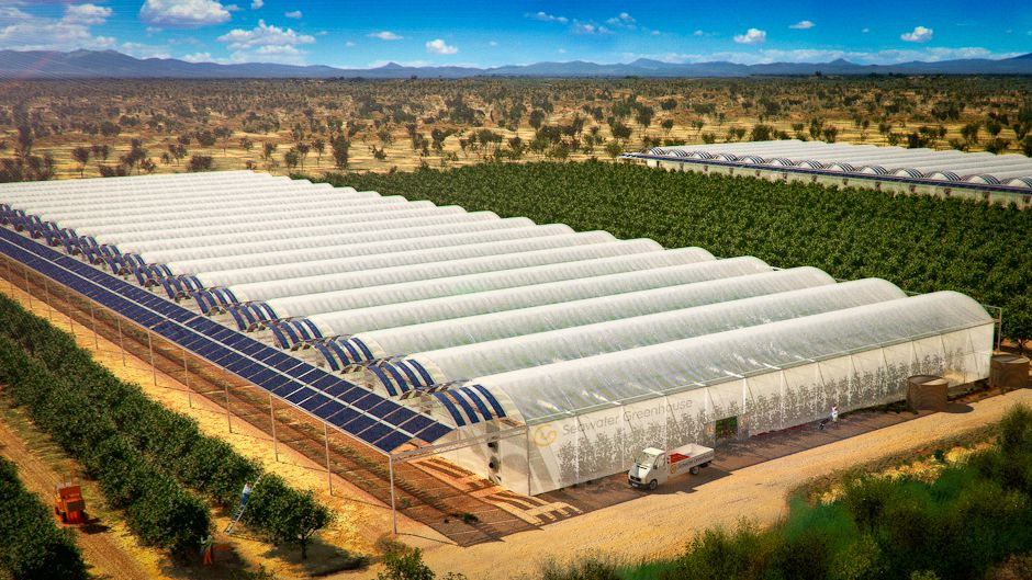 Sundrop Farm The First Farm To Grow Tomatoes In A Desert