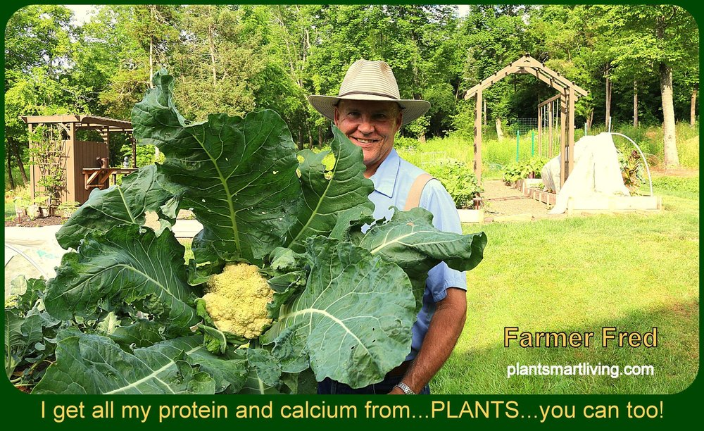 farmer-fred-protein-from-plants-and-calcium-too