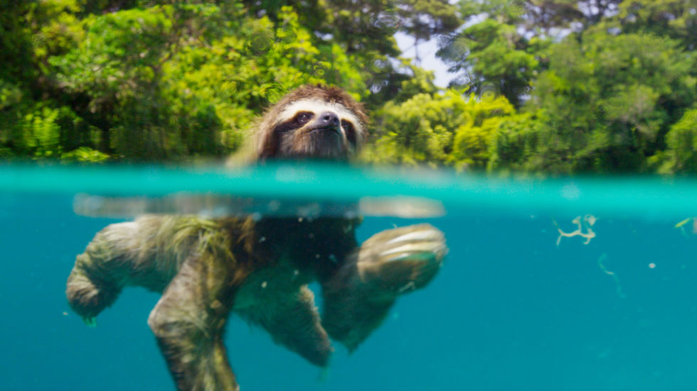 three-toed-sloth-swims-planet-earth-2-review