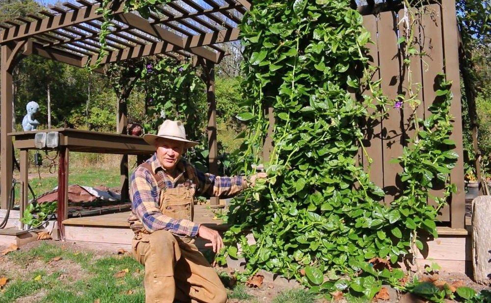 farmer-fred-plant-smart-living-malabar-spinach-vine