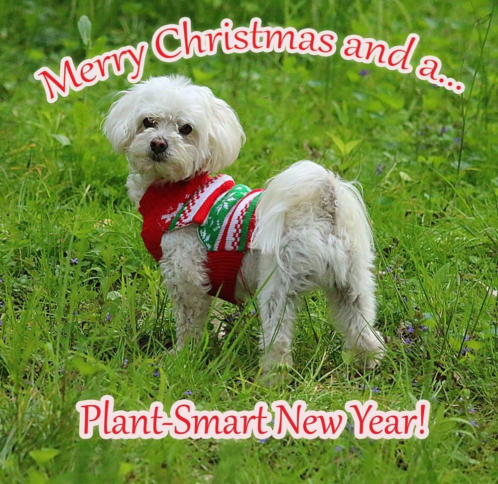 plant-smart-living-merry-christmas-happy-new-year-bailey