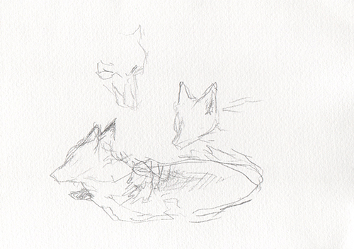 Kitsune 2   graphite on paper  2015