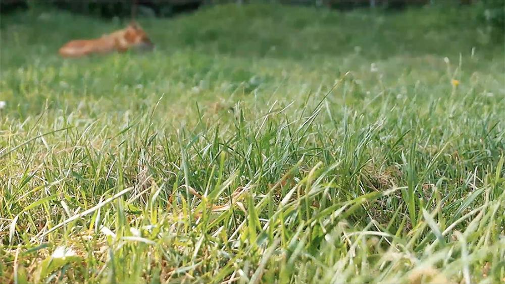 fox still.jpg