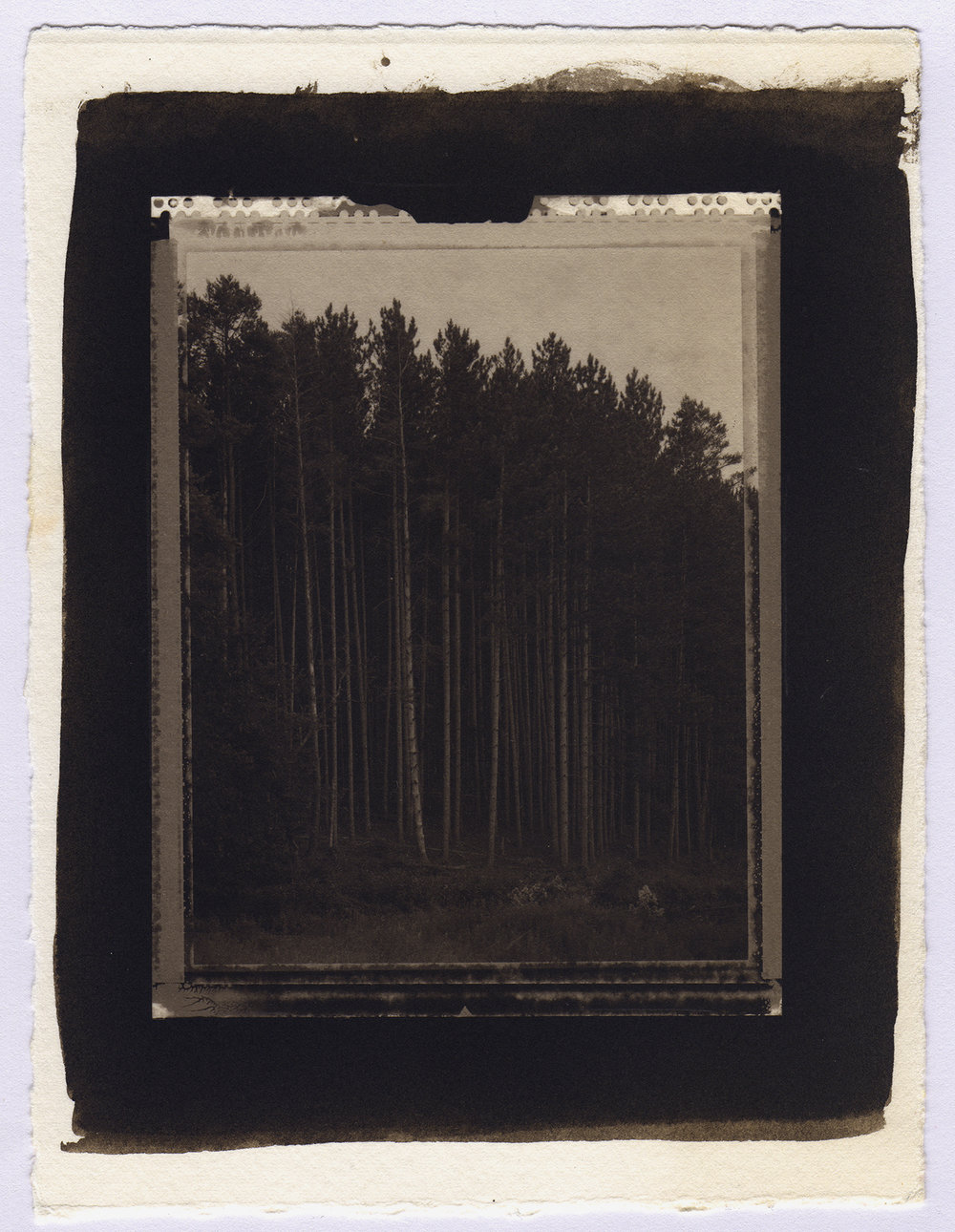 """Tall Pines, Delaware Water Gap, 2004"" Platinum print from 4X5 Polaroid Type 55 negative on Arches watercolor paper"