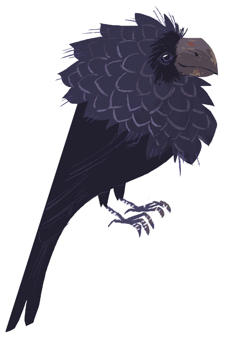 bird6.png