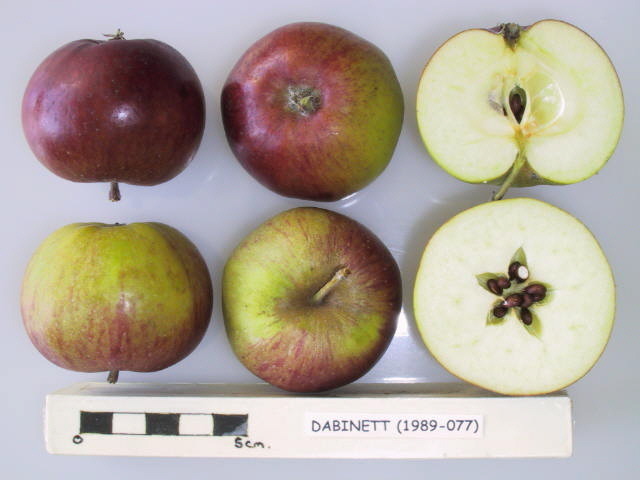 Dabinett is a very high quality English cider variety that provides a bittersweet juice for cider making. Produces a soft, full-bodied, high quality cider.  Picture credit: UK National Fruit Collection. Contains public sector information licensed under the Open Government Licence v2.0.