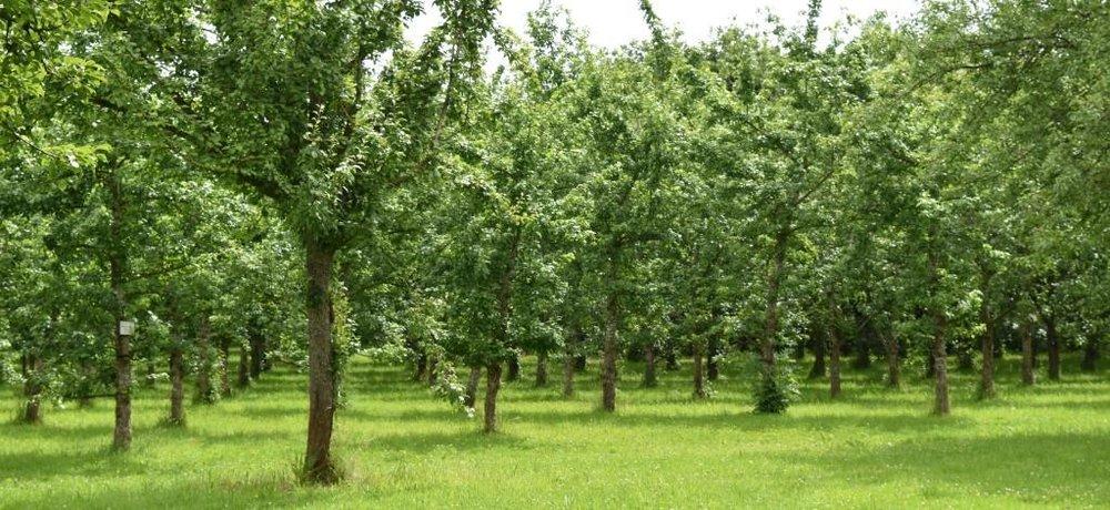 orchard-02.jpg