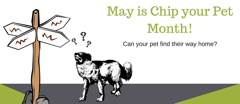 05-May-is-Chip-your-Pet-Month.jpg