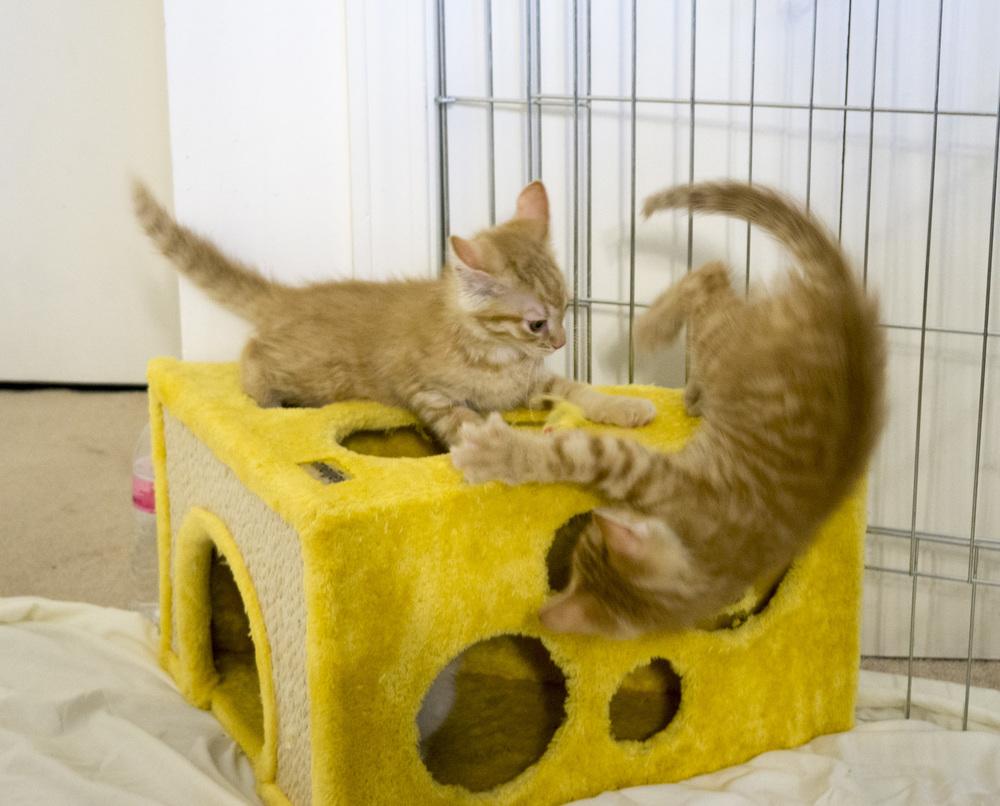 Live Stream — Kitten Academy
