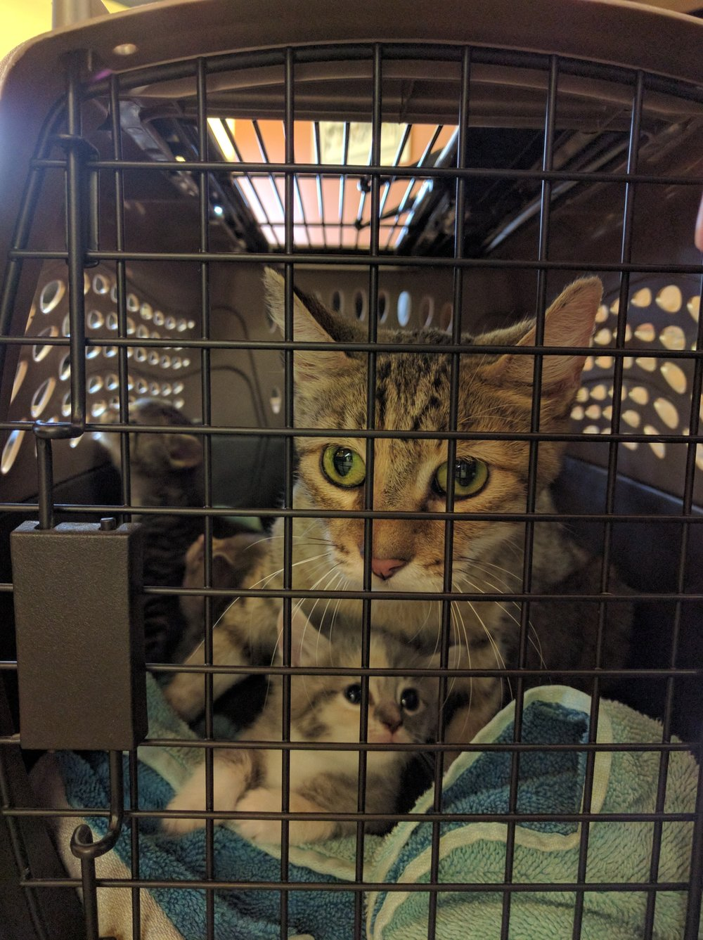 Ivy, Yale, and the rest on the way to the vet.