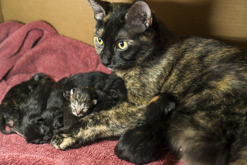 Hazel and her Seven Kittens!