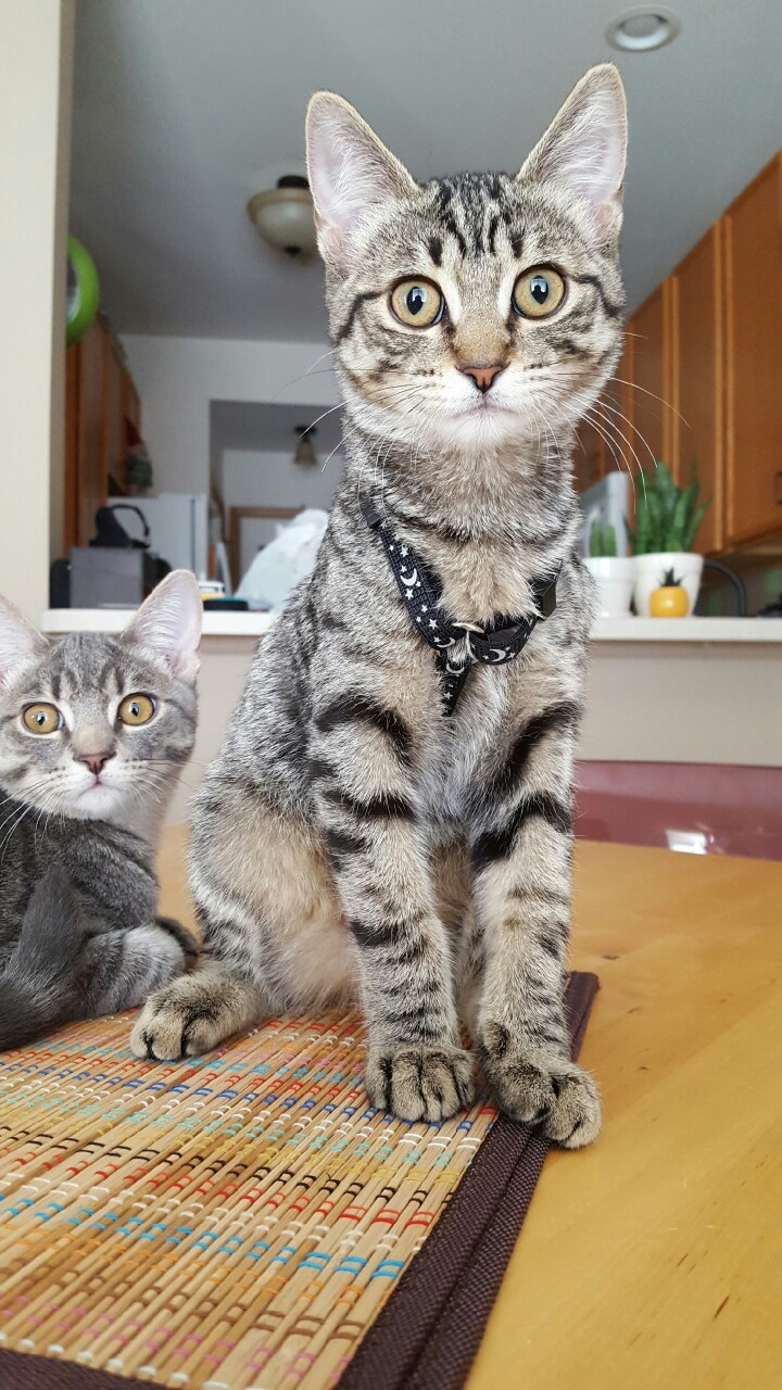 Winnie tries on a harness while Gary photobombs.