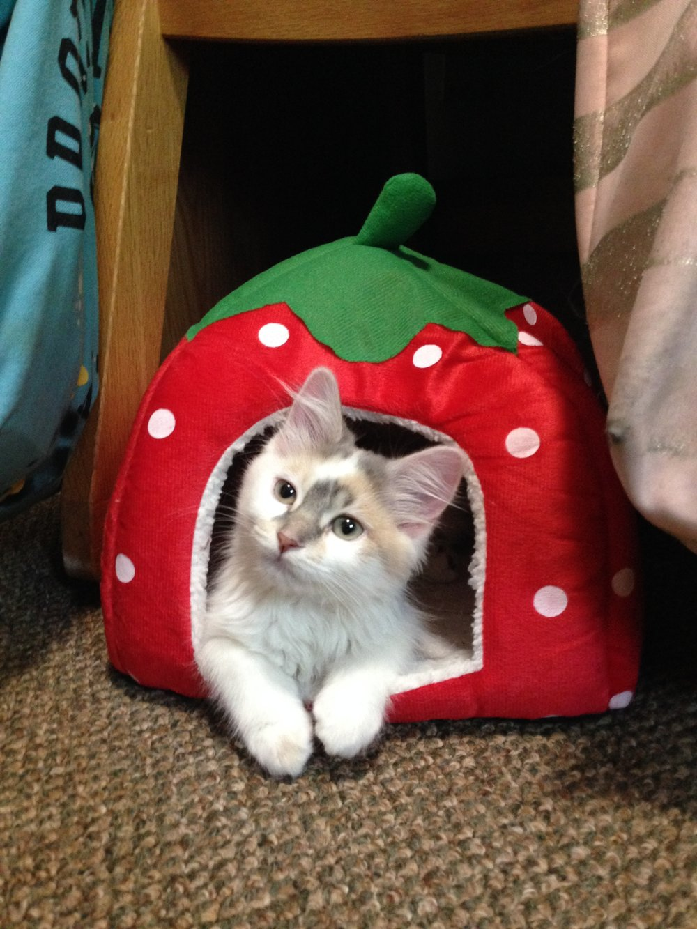 Haddie has a strawberry at her new castle!