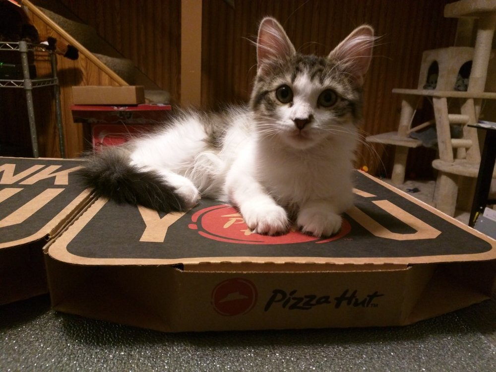 Trout particularly enjoys pizza nights at his new home!