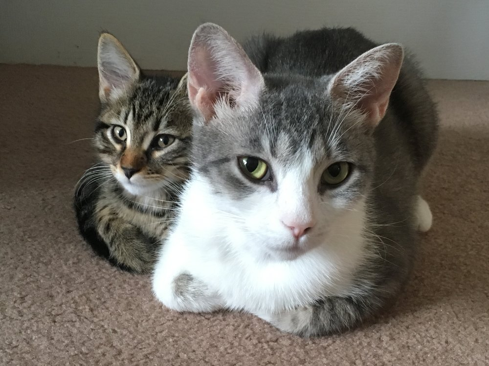 Song and Fiddle working on their synchronized loafing!