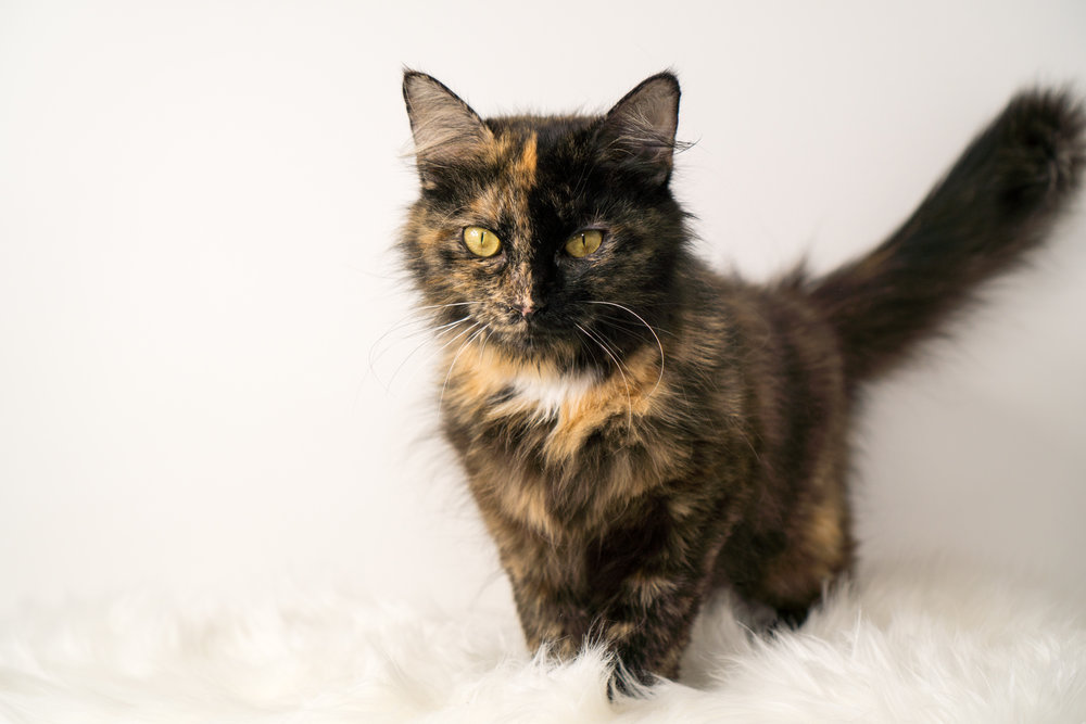 Chili - Momcat
