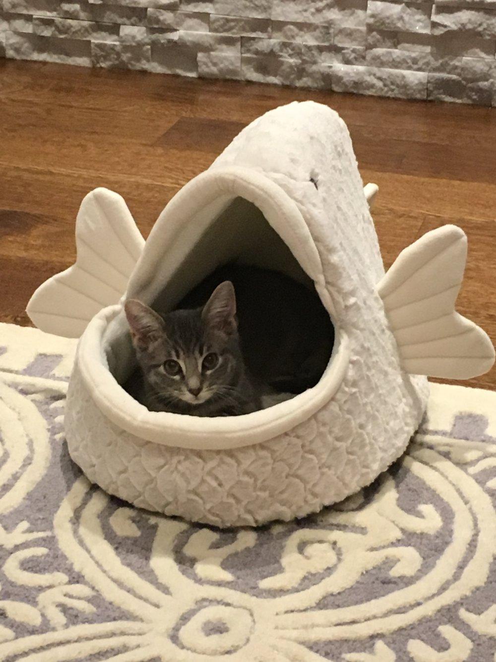Apollo, caught by a fish!