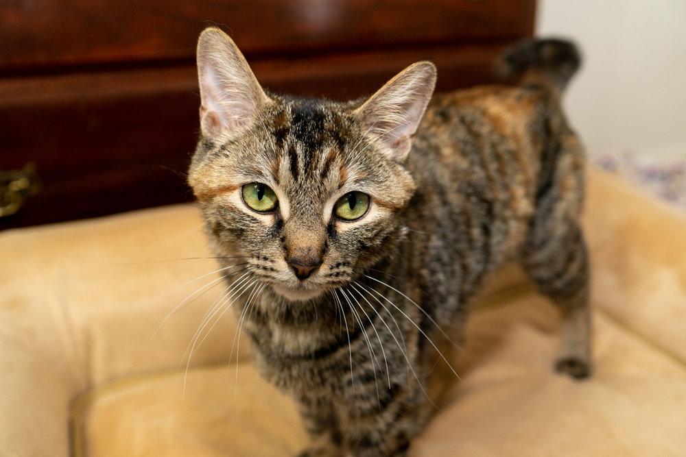 Tiffiny - Momcat