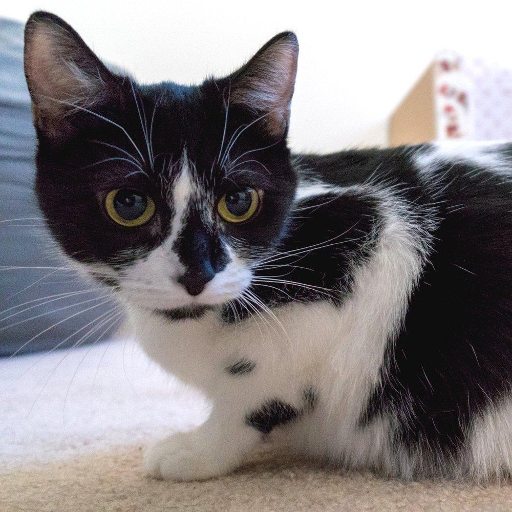 Baftime Kittens (May 2018)
