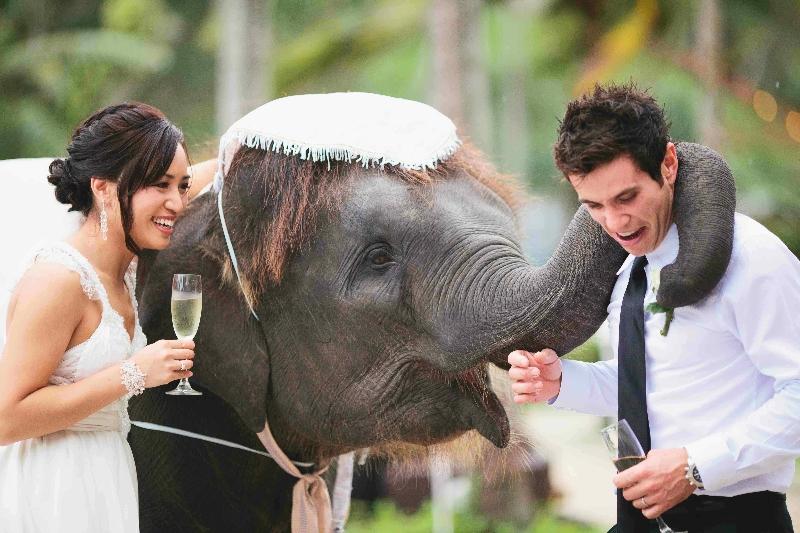 Phuket-Wedding-Thailand-elephant.jpg