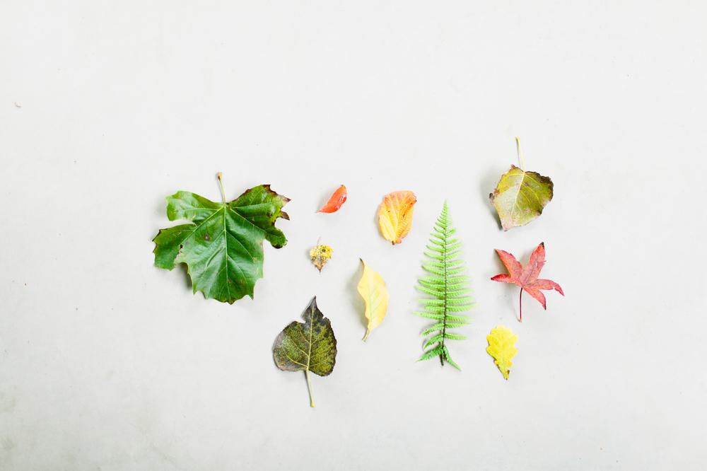 leaves-oktober-37 kopie.jpg