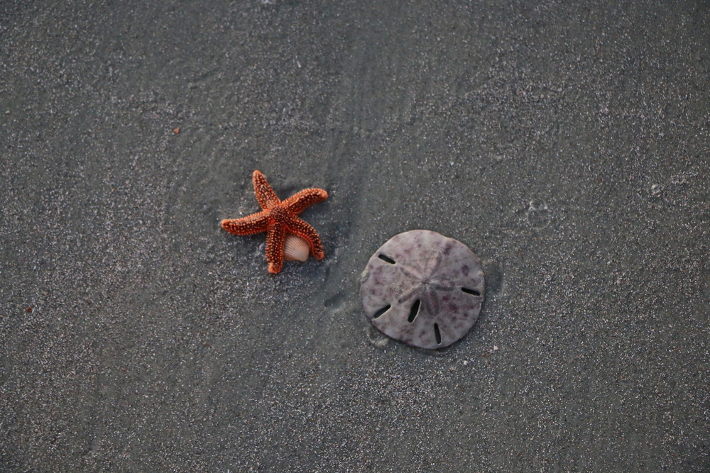 Starfish and Sand Dollar
