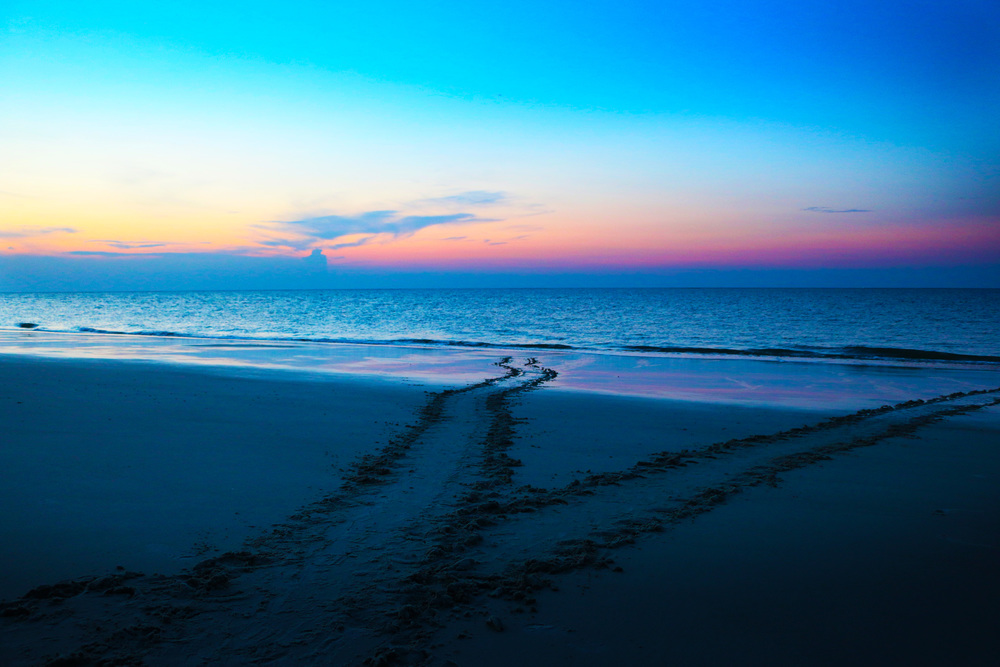 Mama sea turtle tracks during a sunrise on Hilton Head Island, SC. Notice 2 sets of tracks which mean this turtle has already returned to the water. One set to the nest, one set back to the water.