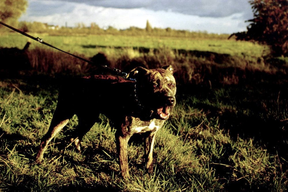 Copy of HUNDE AUS SAMT UND STAHL / DOGS OF VELVET AND STEEL