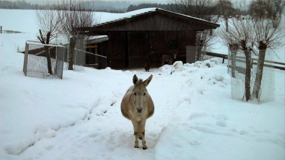 ESEL MIT SCHNEE / DONKEY WITH SNOW