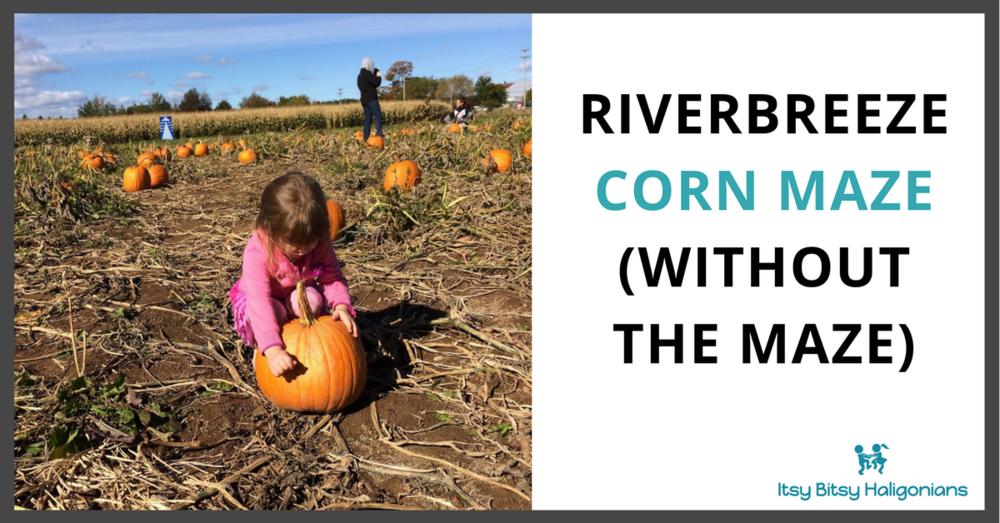 riverbreeze corn maze.png