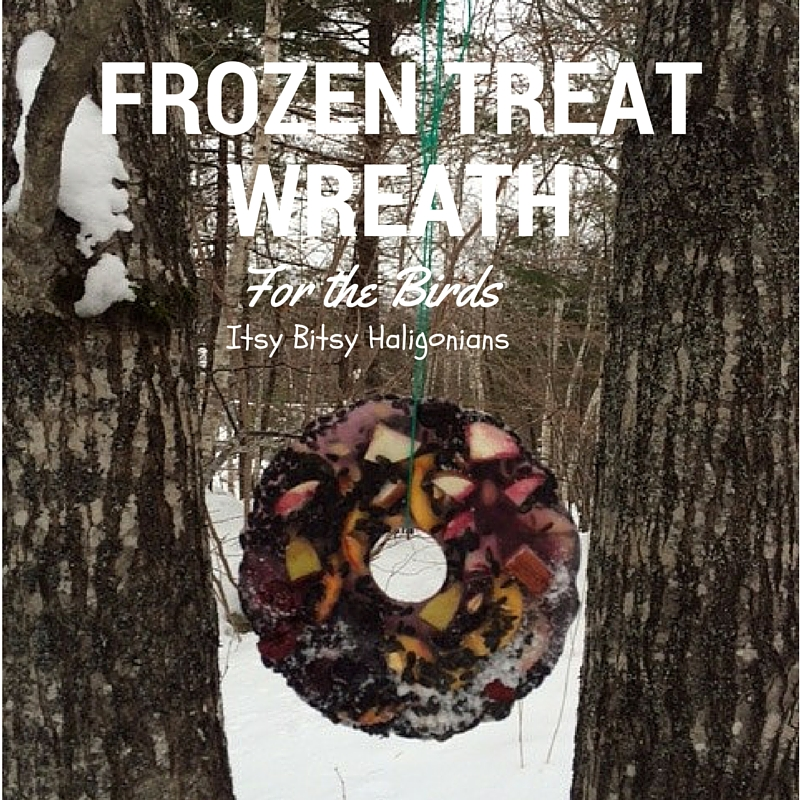 How to make a frozen treat wreath for birds.jpg