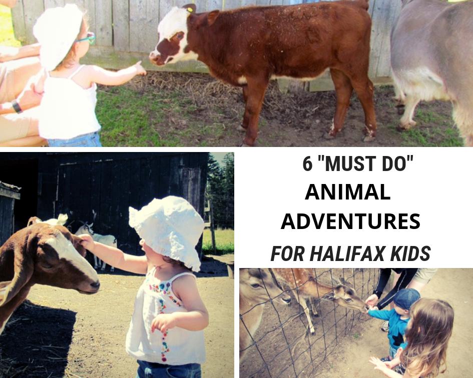animal adventures for halifax families