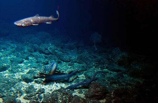 Deep-sea volcano a hotspot for mysterious life - Caleb JonesSeptember 16, 2016