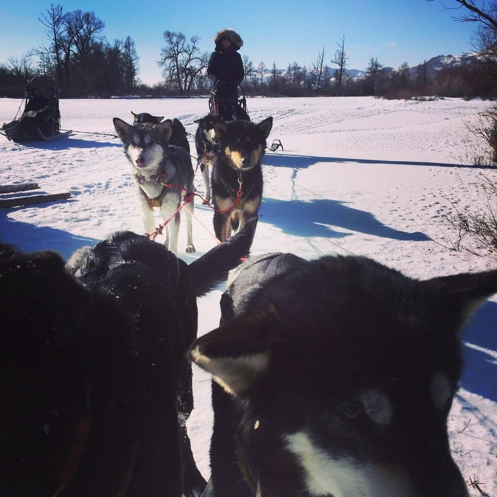 Me riding the huskies. Photo: Lucja