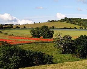 farmland+2.jpg