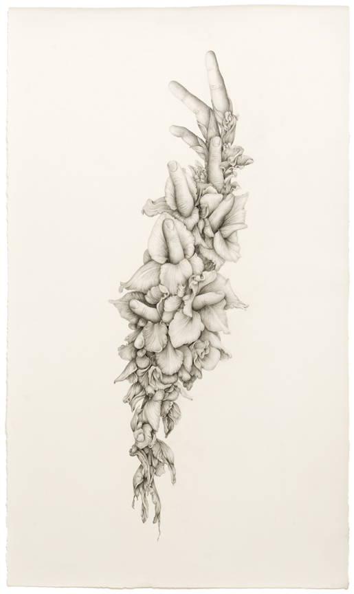 """Untitled (Gladiolas)"" pencil, colored pencil on paper, 27.75"" x 16.25"", 2014"