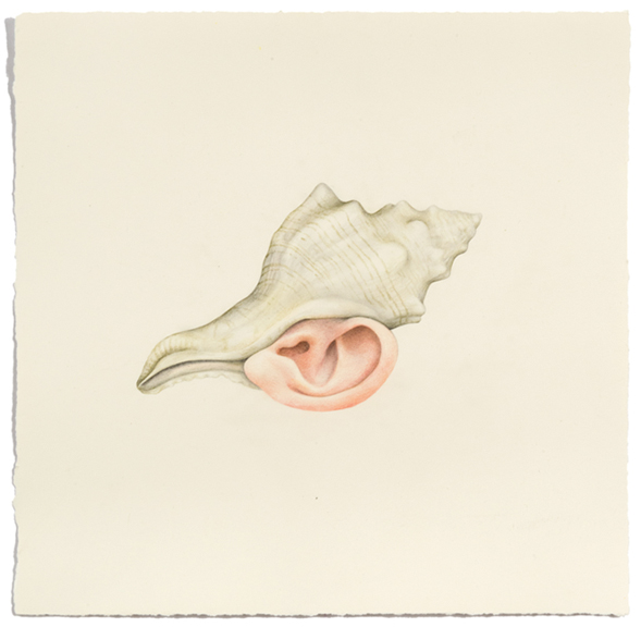 """Untitled (Shell Ear)"" colored pencil on paper, 13"" x 13.5"", 2013"